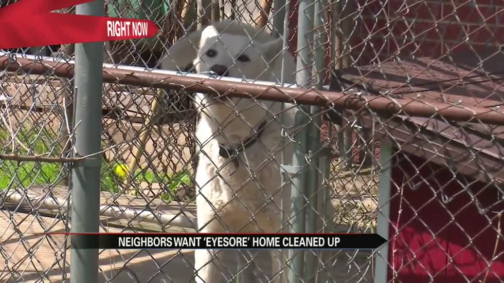 15 dogs, 2 goats on half an acre of property, Elkhart County fed up