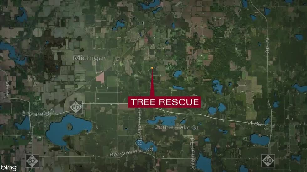 73-year-old killed while cutting down a tree