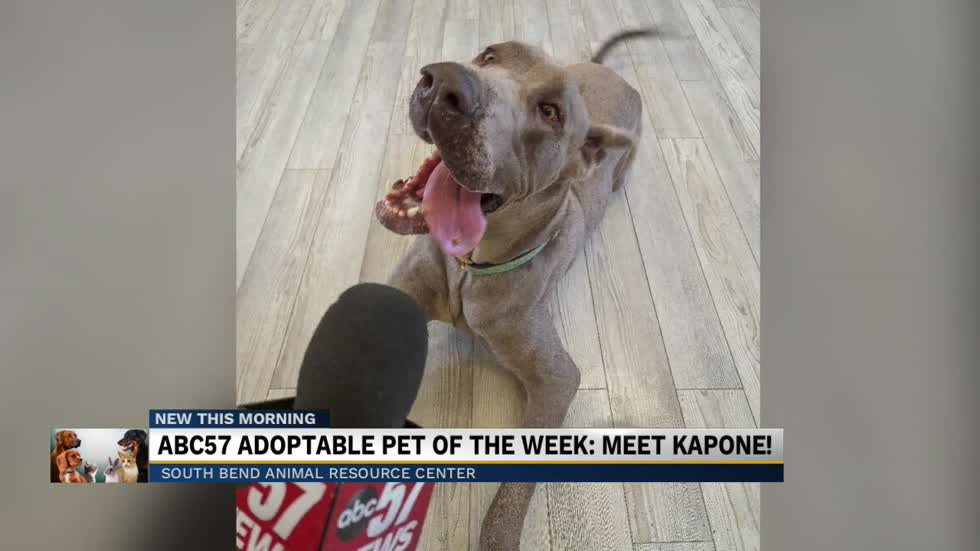 ABC57 shining a spotlight on adoptable animals: Meet Kapone