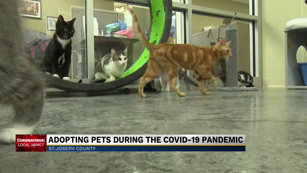 Adopting pets during the COVID-19 pandemic