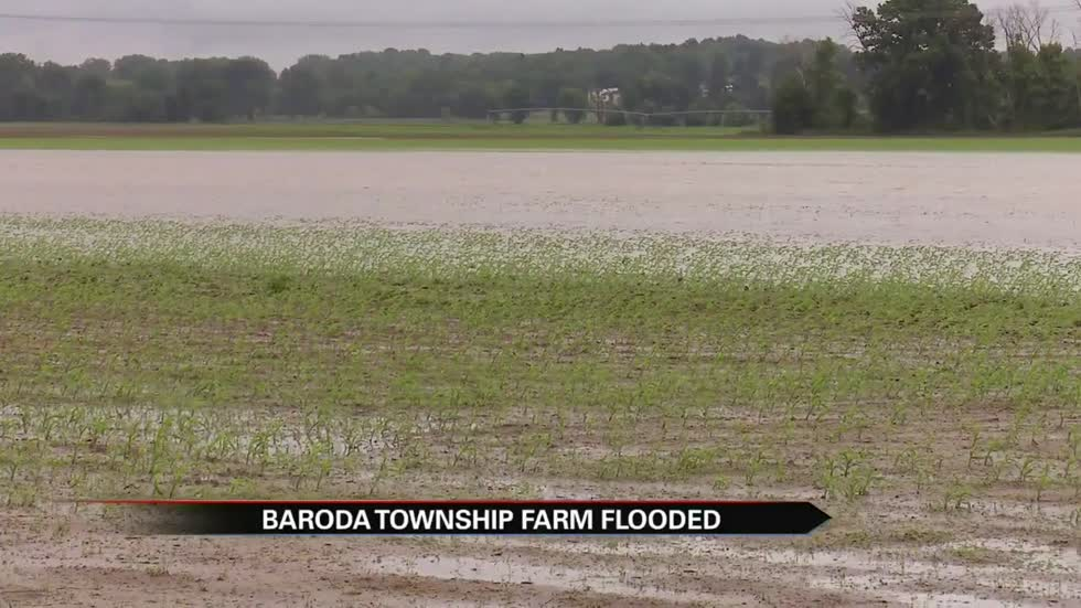 Baroda farms suffering with water-logged crops