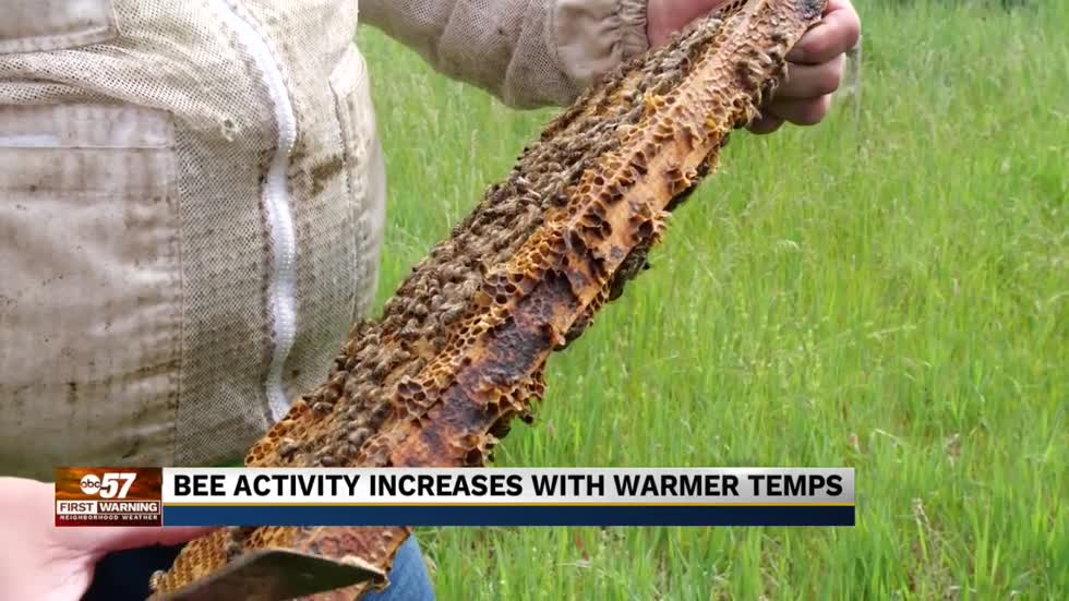 Michiana bee activity increases with warmer temperatures