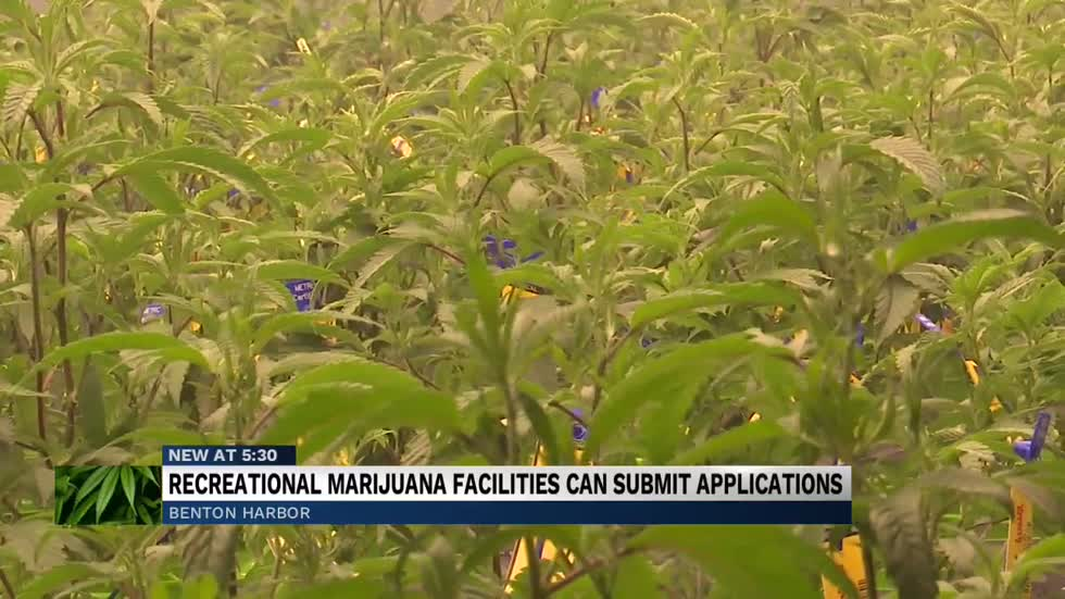 Benton Harbor accepting applications for recreational marijuana...