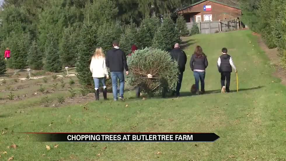 Families chop down tradition at local Christmas tree farm