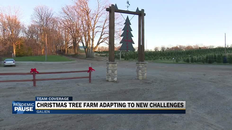 Christmas tree farm works through COVID-19 crisis to continue the tradition