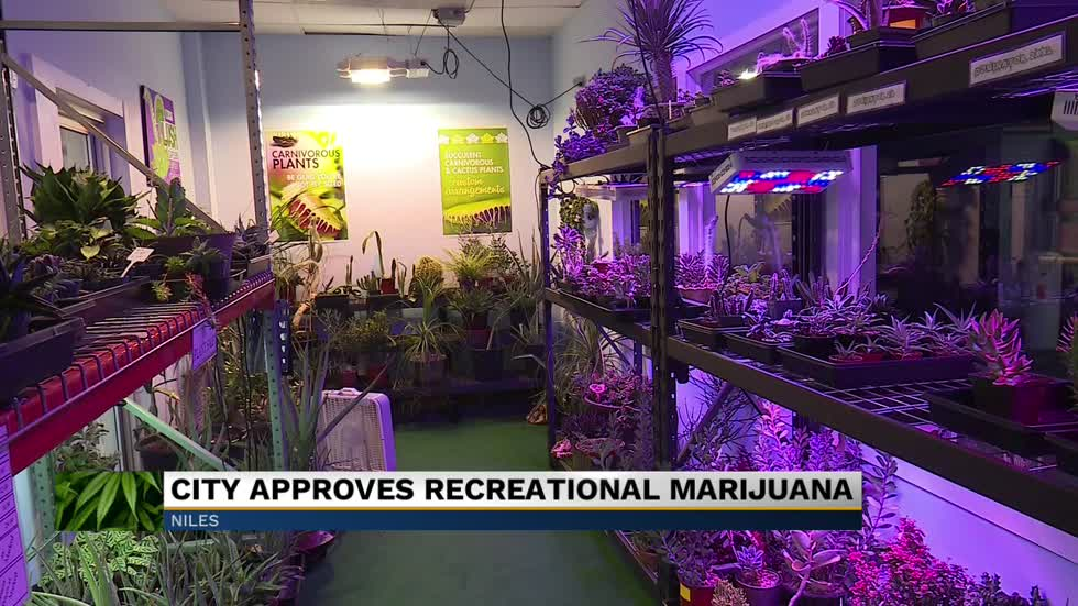 City council reverses recreational marijuana decision