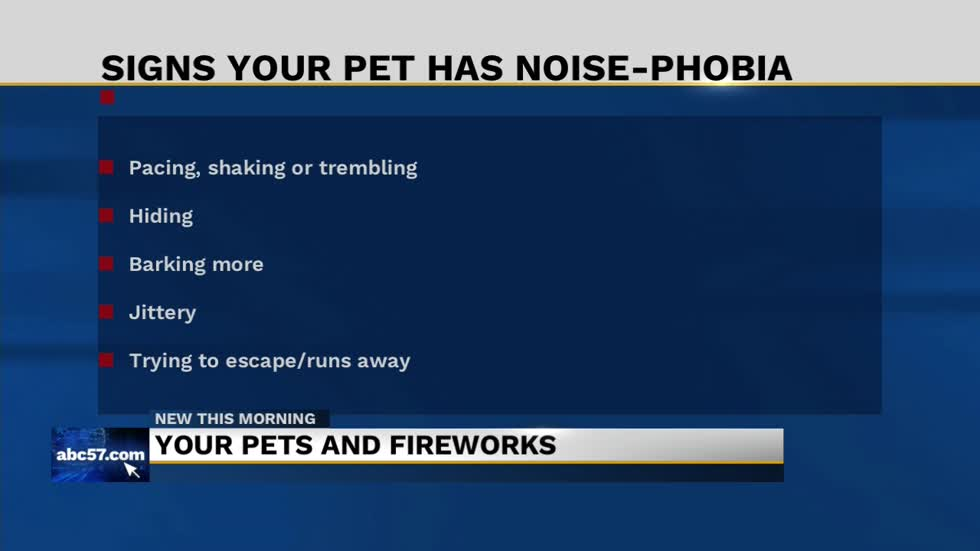 Comforting your pets dealing with noise phobia during the 4th of July fireworks