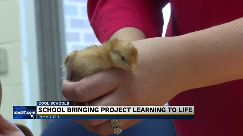 Cool Schools: Washington Discovery Academy hatches chicks in the classroom