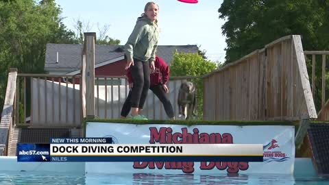 Dogs make a splash at dock diving competition in Niles