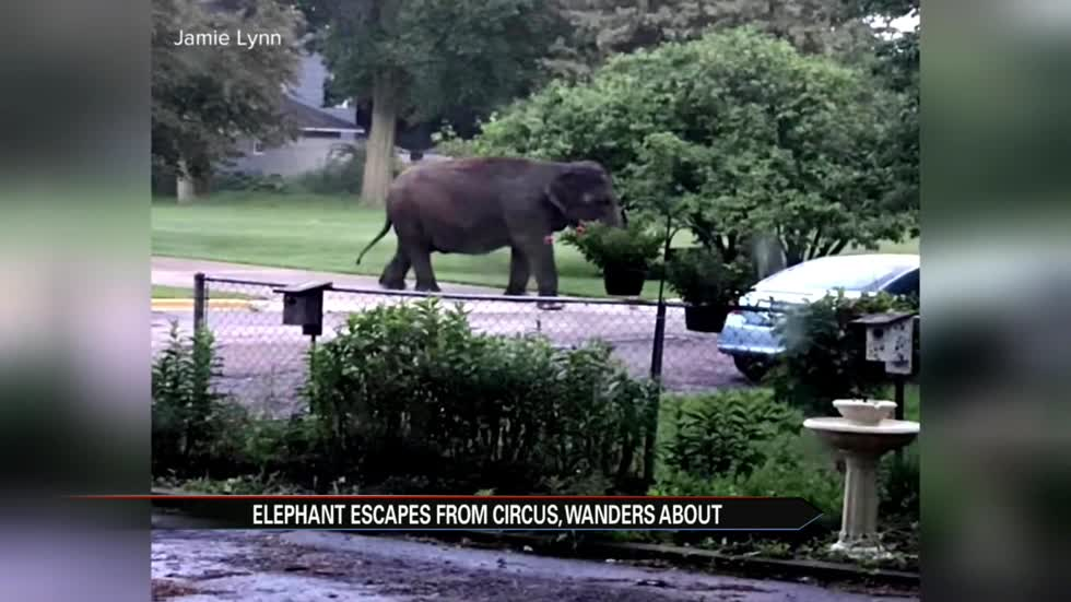 Escaped elephant takes a stroll through Wisconsin neighborhood