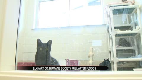 Elkhart Humane Society full after floods