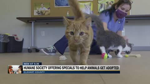 Elkhart Humane Society offering special deals on cats and dogs