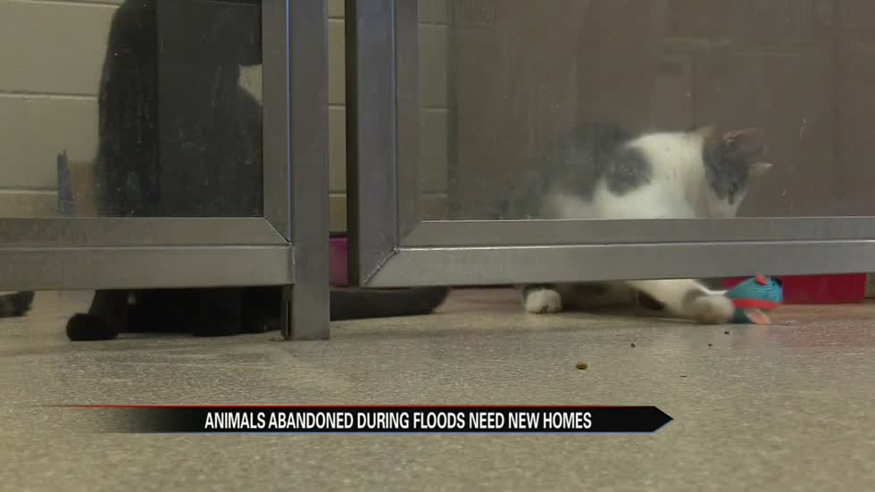 Elkhart Humane Society dealing with effects of February floods