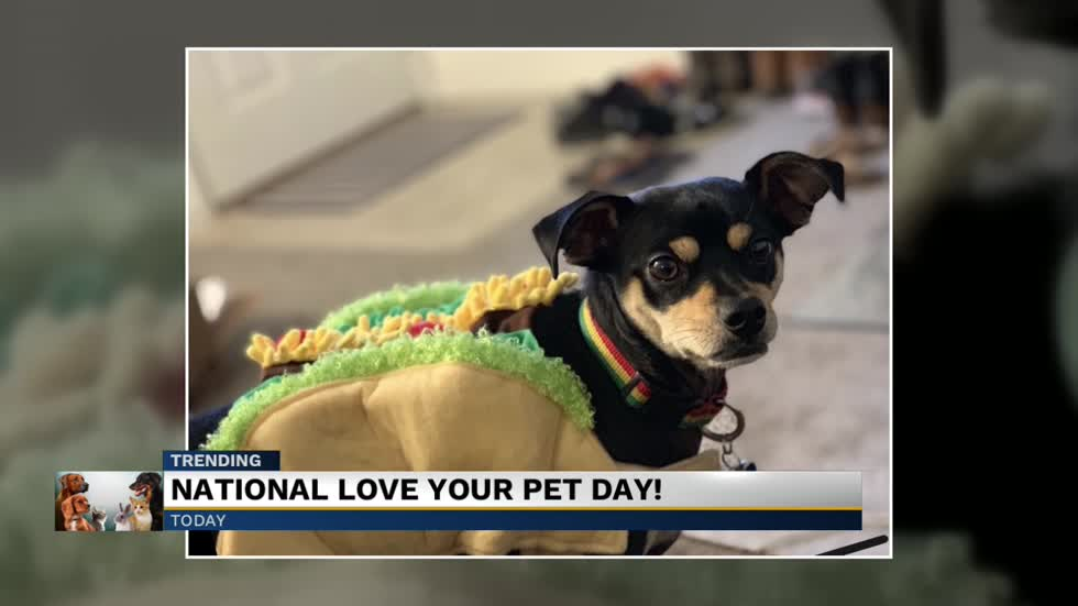 February 20 is National Love Your Pet Day