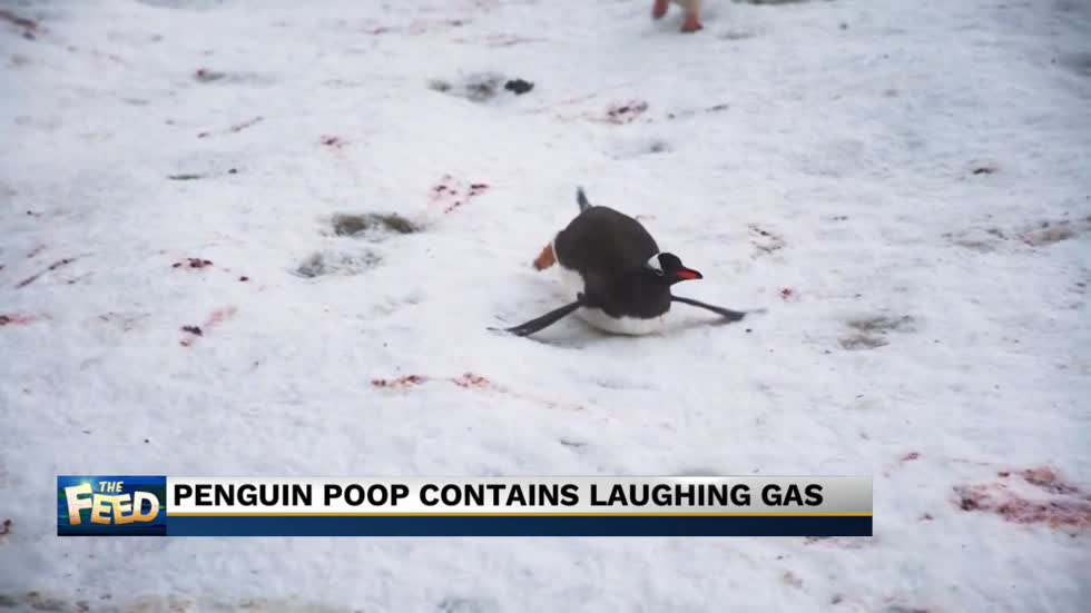 The Feed: Penguin poop is a laughing matter