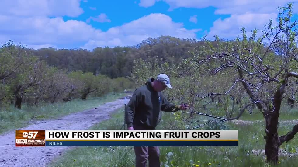Fruit crop outlook after frosty start to May