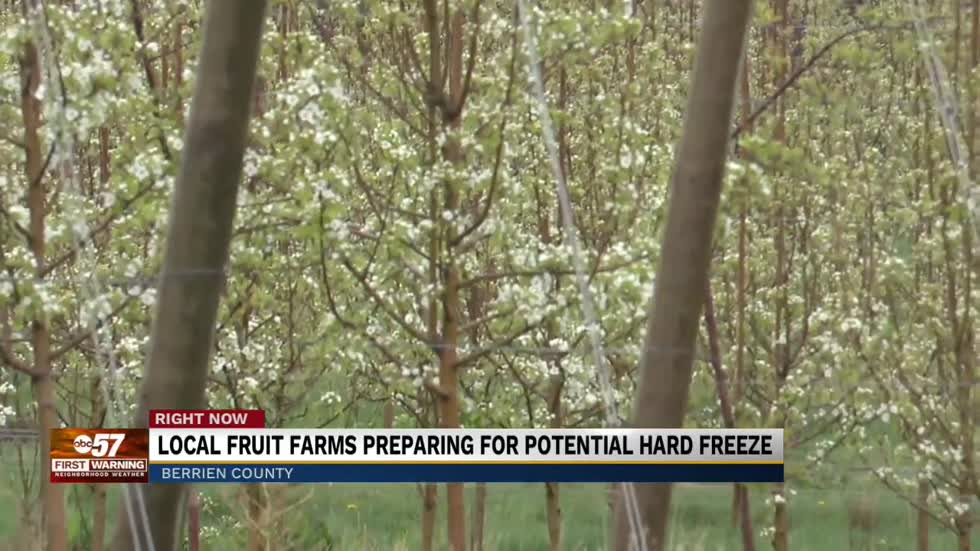 Hard freeze could devastate local crops