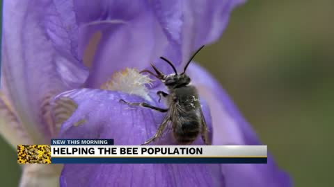 Helping the bee population