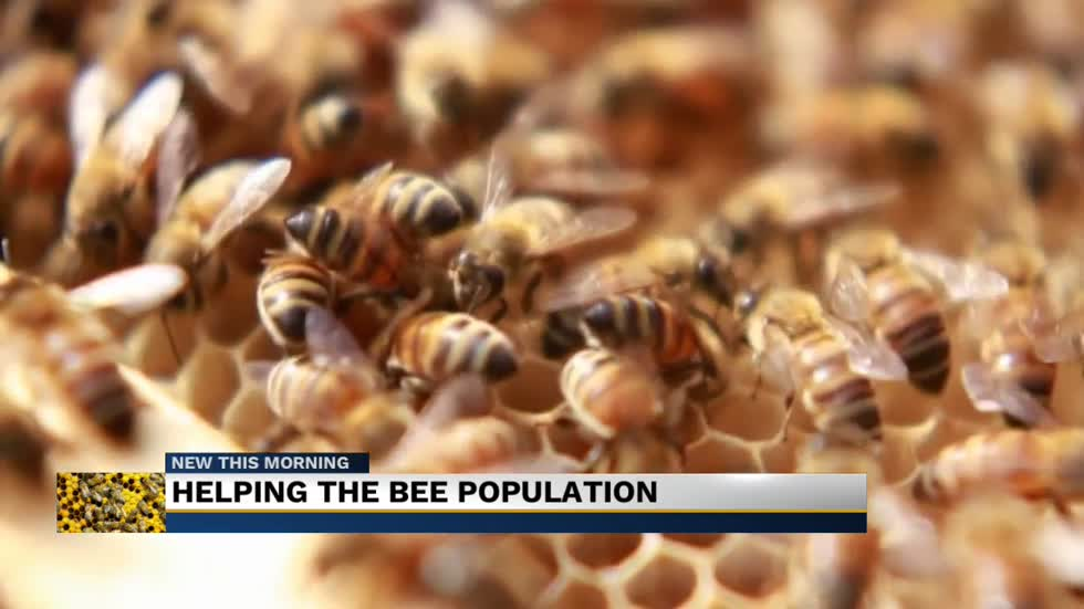 Getting the buzz out: helping the bee population