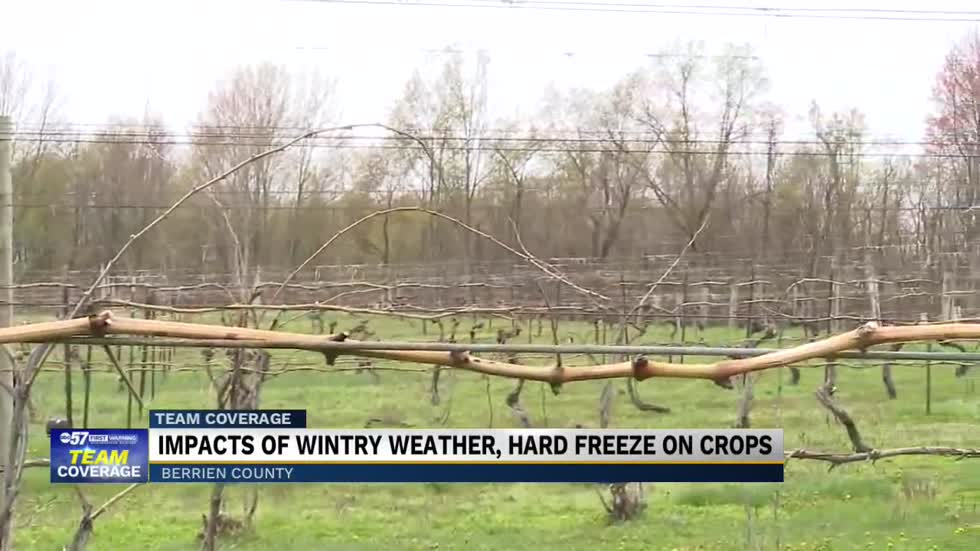 Local fruit farms react to frigid April temperatures