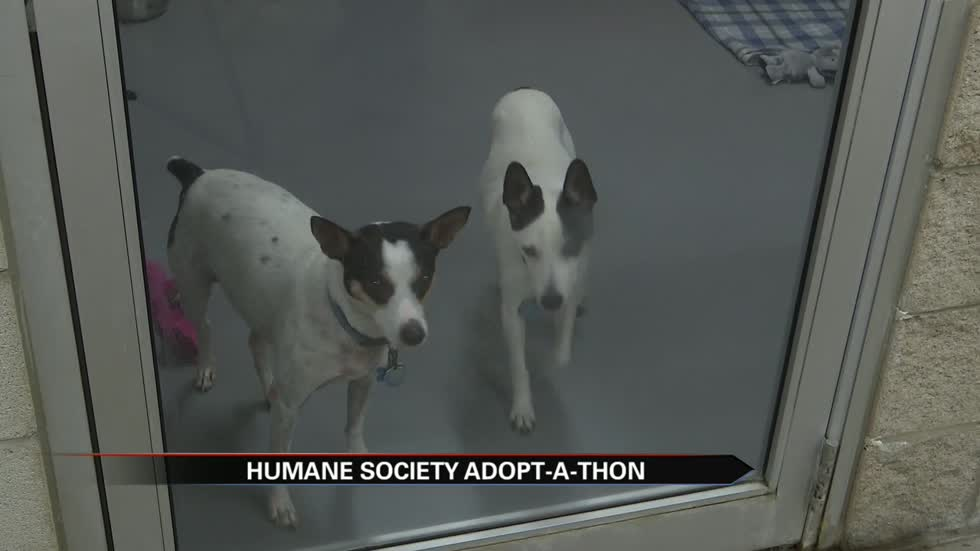 Humane Society of St. Joseph County hosting Adopt-A-Thon