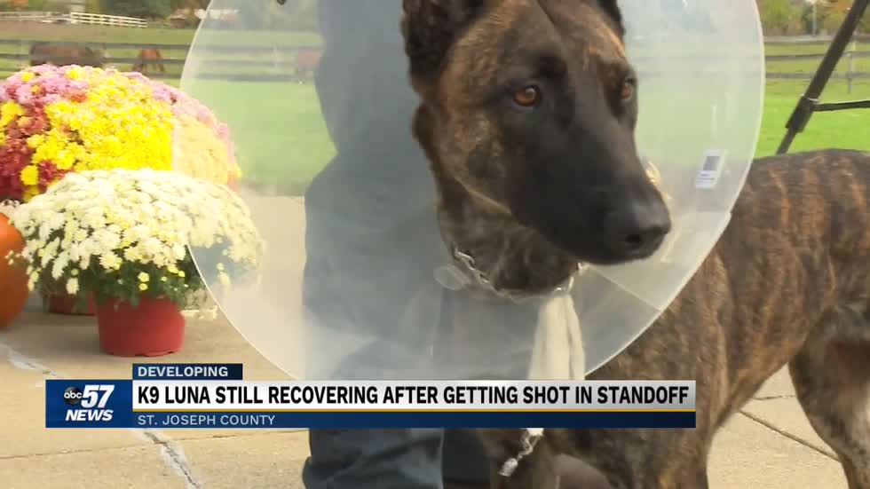 K-9 makes first public appearance after surgery to remove bullet