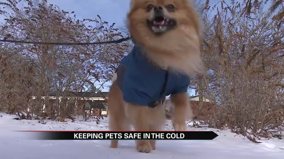 Vets: Negative temps mean you should only let the dog out for 3 to 4 minutes