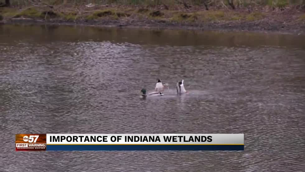 Large chunk of Indiana wetlands could soon be eliminated