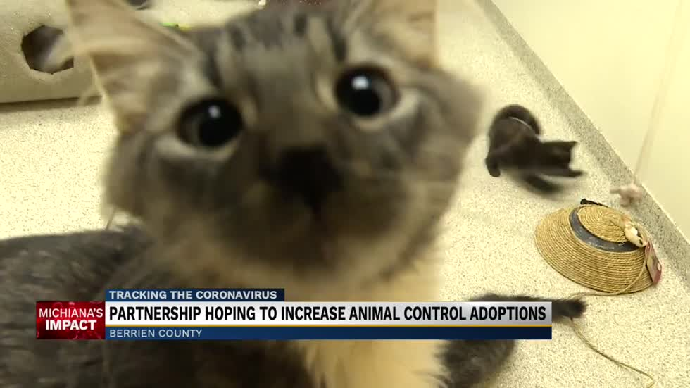 Partnership aims to increase animal control adoptions