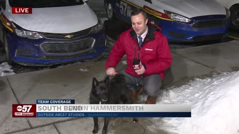 The Cold Temperatures and Your Furry Friends