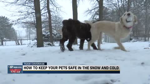 Pets safety at risk in frigid temperatures 2