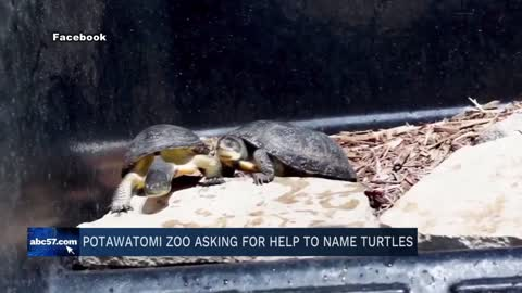 Potawatomi Zoo asks for help naming turtles