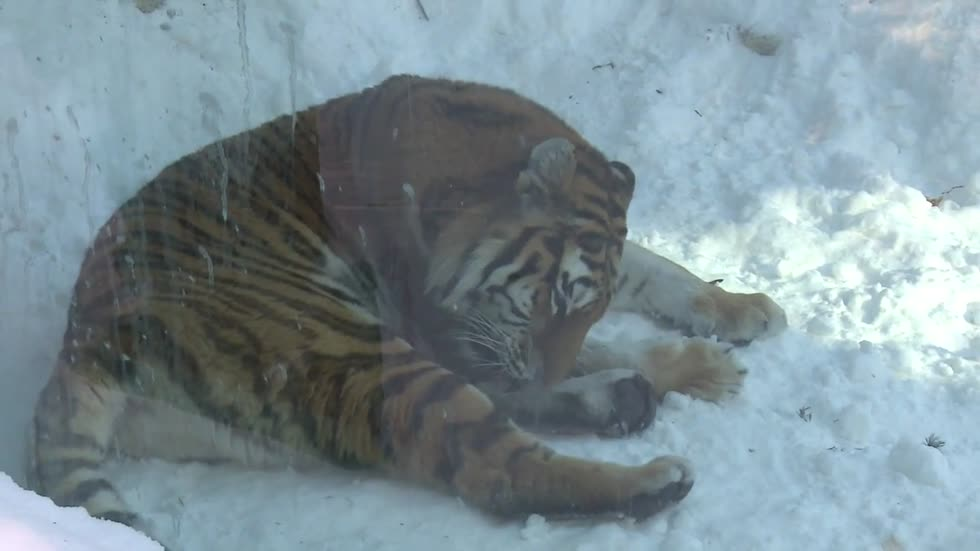 Potawatomi Zoo prepared for all kinds of weather