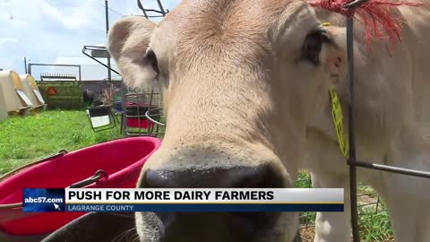 LaGrange farmer starts unique rent-a-calf program to save dairy farms