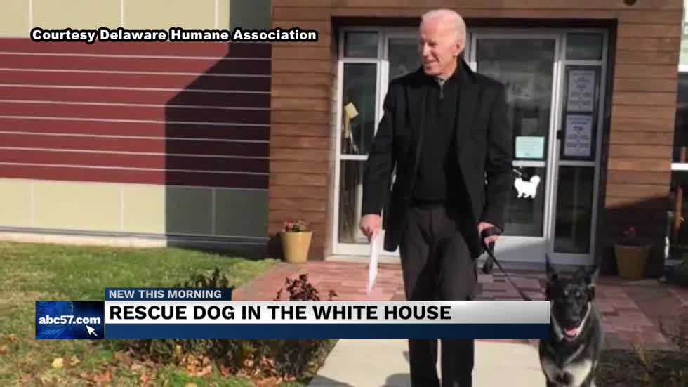 White House welcomes first rescue dog, Major