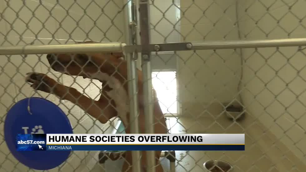 Several animal shelters are overcrowded