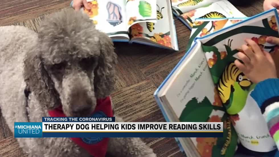 Therapy dog helping kids improve reading skills
