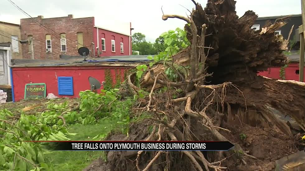 Storms cause tree to crash into Plymouth restaurant