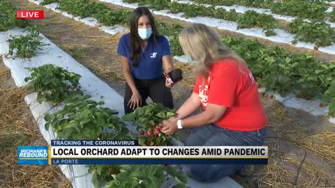Garwood Orchards and Farm Market opens for day two of strawberry picking