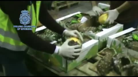 1,642 pounds of cocaine found hidden in pineapples
