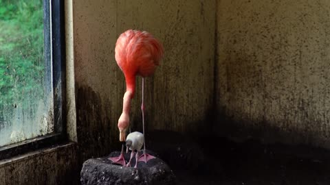 Potawatomi Zoo announces several births, including first flamingo chick