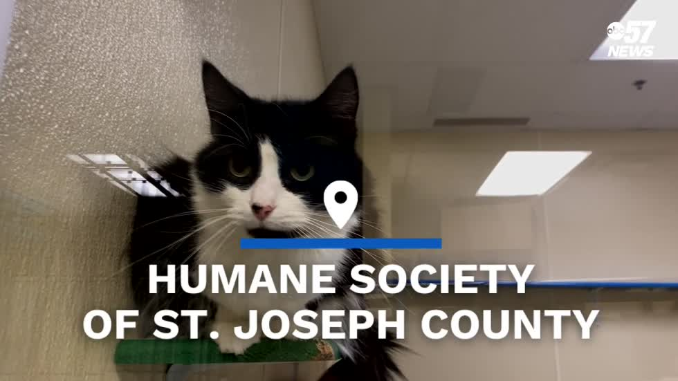Humane Society of St. Joseph County offering $5 cat adoptions in September