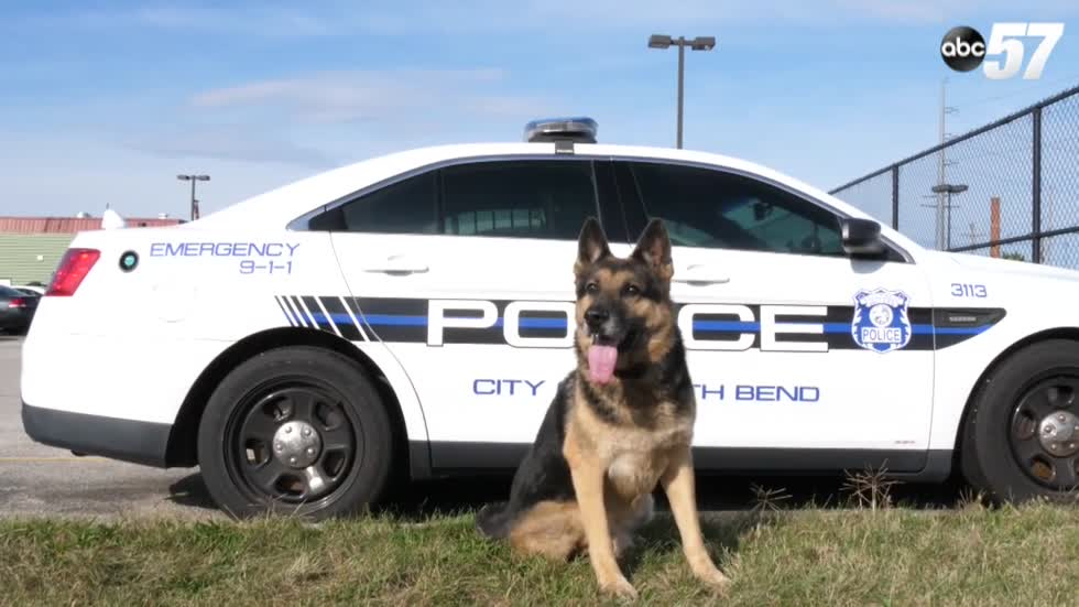 Justice has been served: A look at a retiring South Bend Police K-9's career