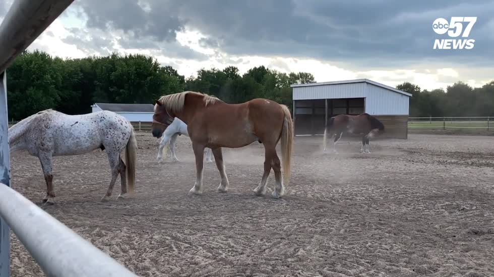 South Bend nonprofit needs volunteers to care for therapeutic horses