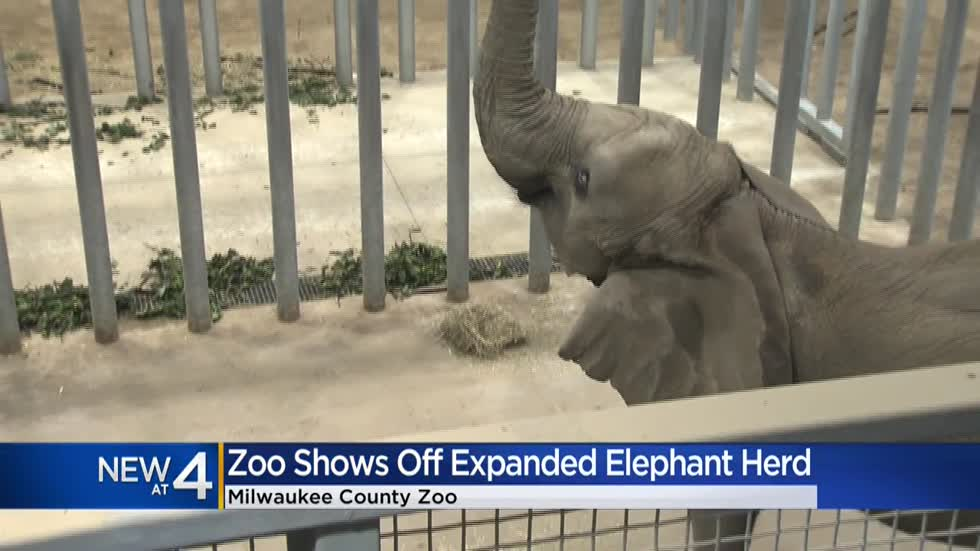 Milwaukee County Zoo shows off recently-expanded African elephant herd