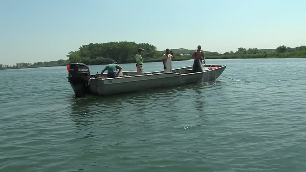 Scientists conduct two-week search after an Asian carp is found 9 miles from Lake Michigan