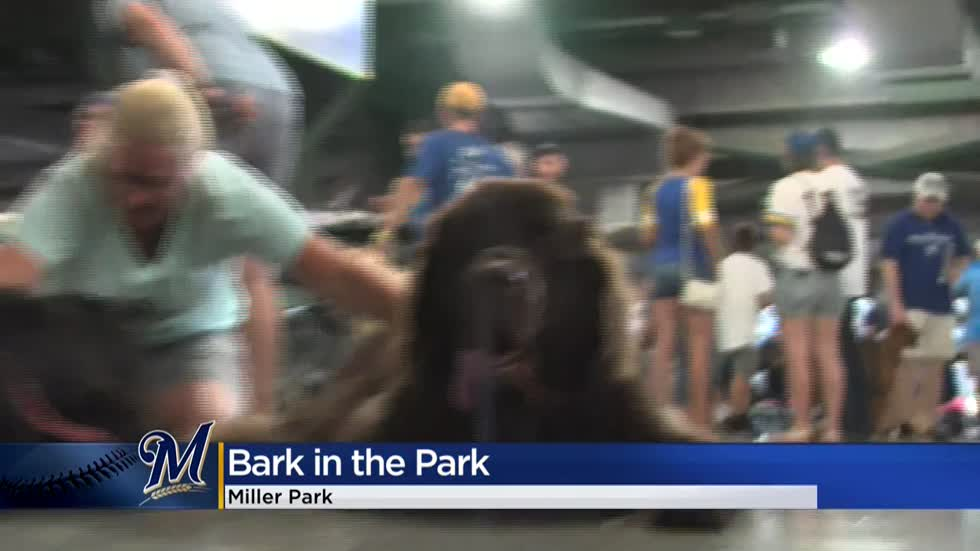 Brewers welcome dogs to Miller Park for Bark in the Park Night
