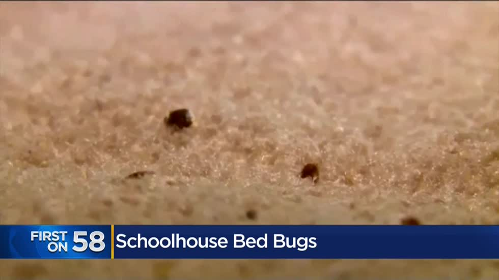 No state laws for bed bugs in schools, local pest expert gives prevention advice