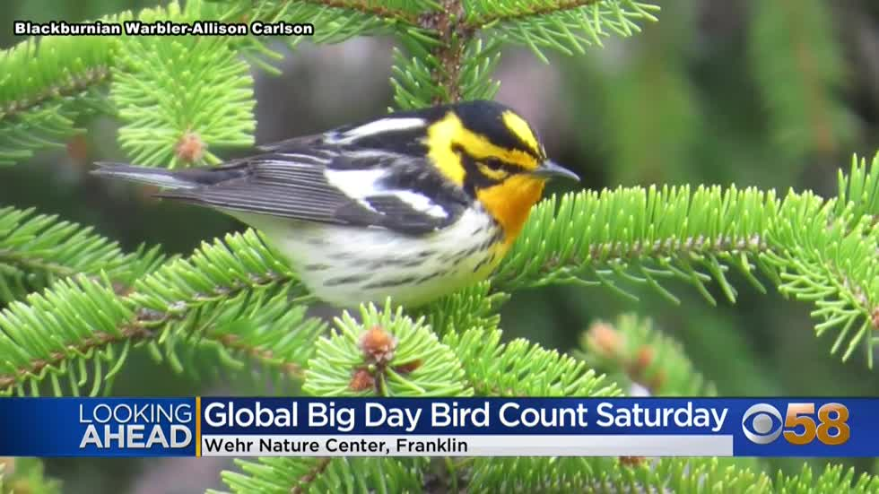 "Count the birds flying by this Saturday during ""Global Big..."