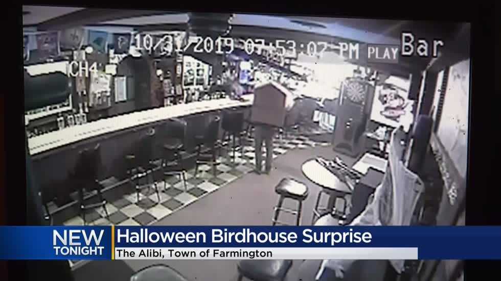 Watch: Man dresses up as birdhouse, releases live birds in Washington County bar